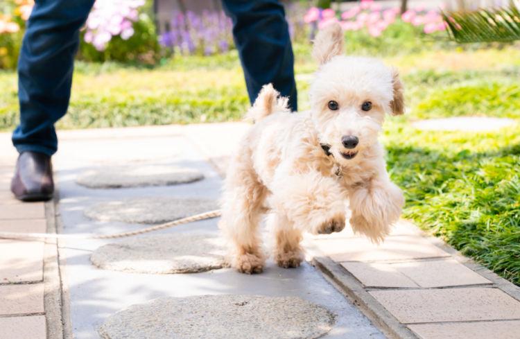 老犬の夜鳴き「予防方法」①【適度な運動】