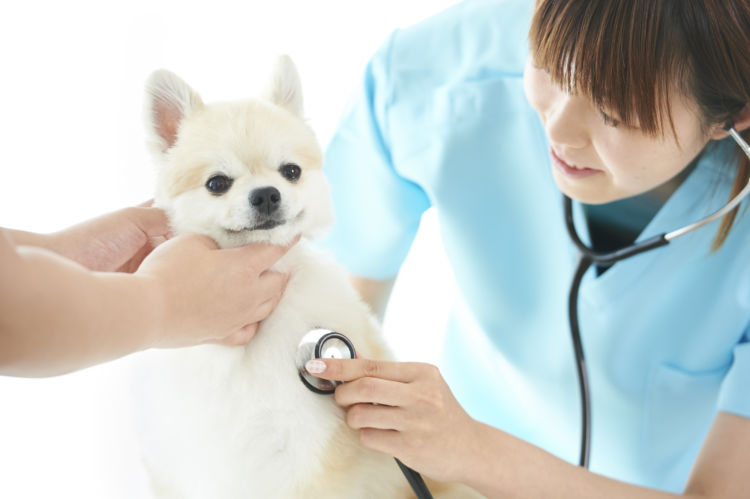 犬 誤飲 獣医師 動物病院