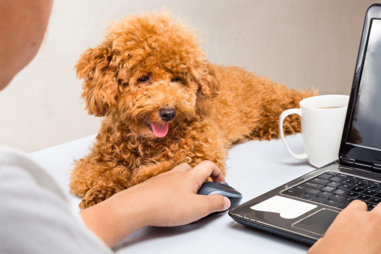 犬 テーブル コーヒー 誤飲
