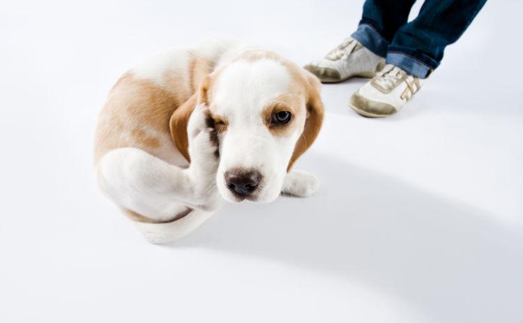 犬の「アレルギー」の症状は?(食物アレルギー)