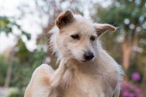 犬の膿皮症は早期発見が大事。飼い主にできる3つのこと