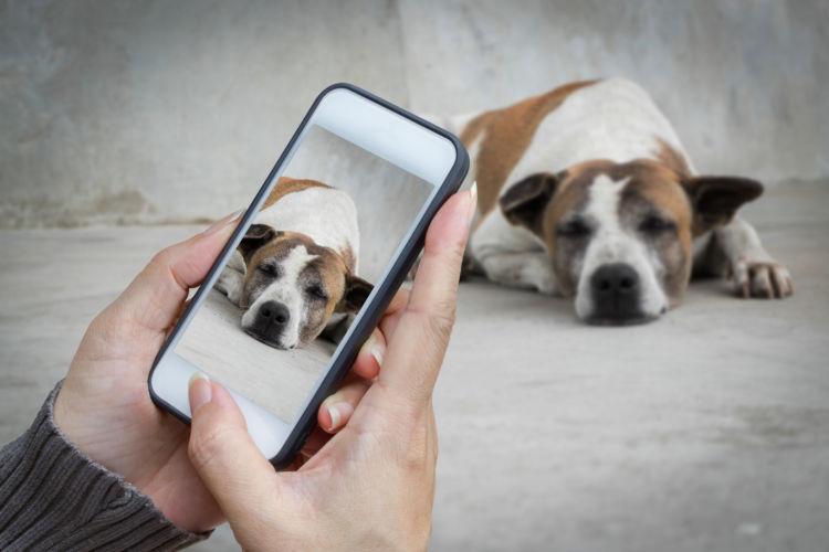 誤飲の応急処置・対処法④【今の愛犬の様子を伝える】