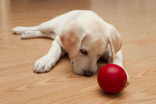 犬はおもちゃ好きとは限らない?犬がおもちゃで遊ばない、4つの理由