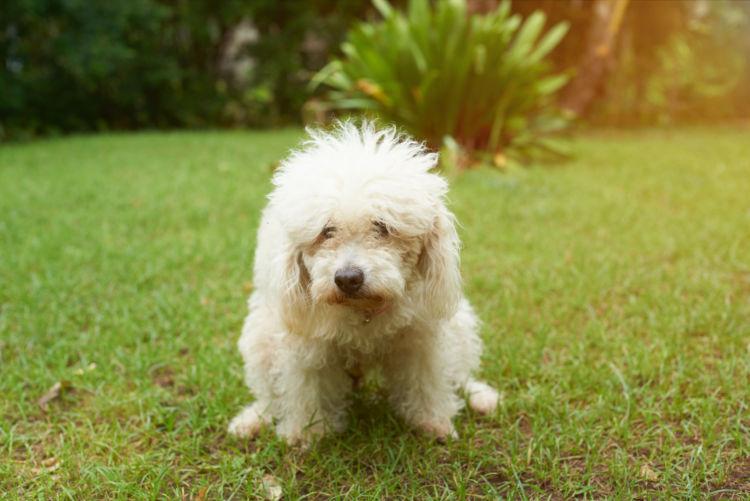 老犬の下痢【予防対策】