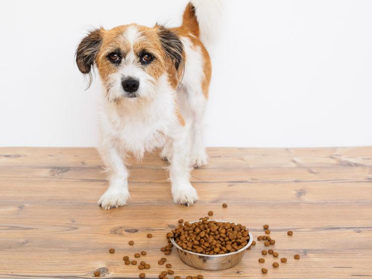 【獣医師監修】老犬がご飯を食べない原因や理由は?ご飯を食べない時の対処法やポイント・コツ!