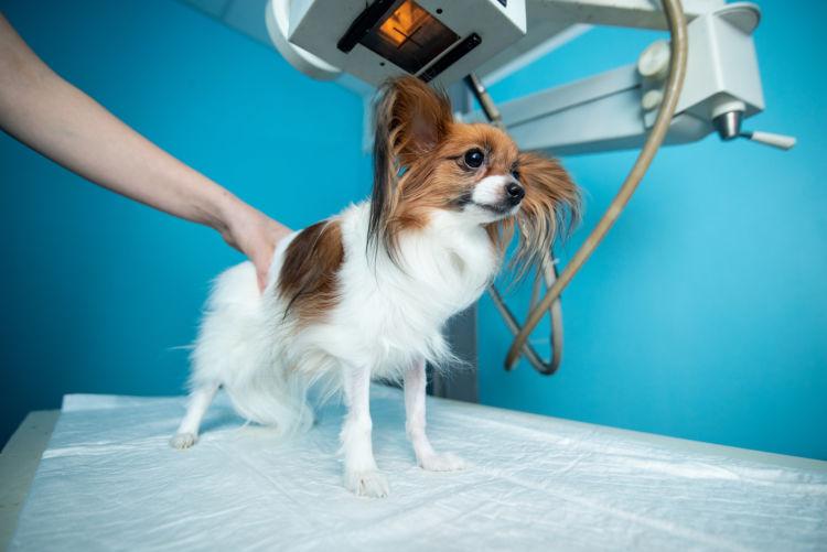 老犬 振戦 震え 検査