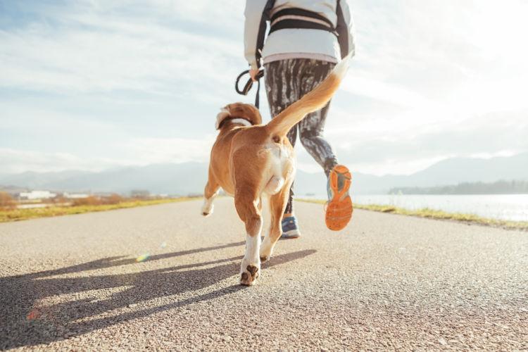 「老犬の震え(振戦)」予防・対策②【筋肉】