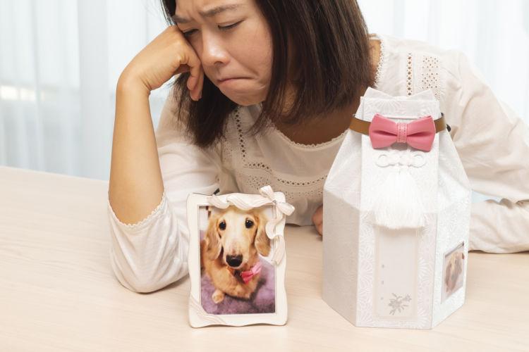 老犬の最期の症状【ケース別に見る死】