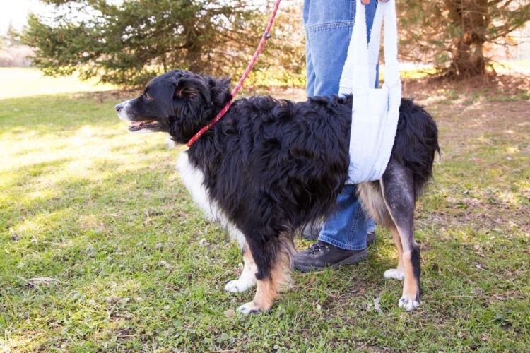 老犬の最期の症状「ケース①」【末期癌(がん)・前庭疾患】