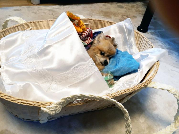 老犬の最期「看取り方」⑧【火葬】