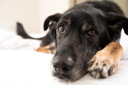 なぜ、ペットシーツをビリビリにかむの?犬の気持ちに合わせた効果的なしつけ術