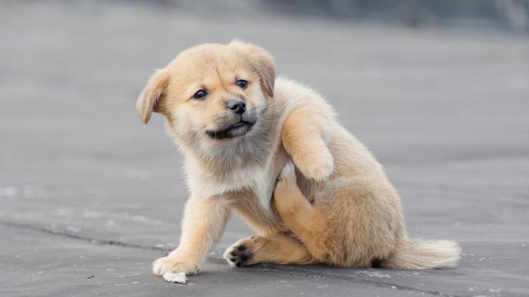 犬 アレルギー かゆい