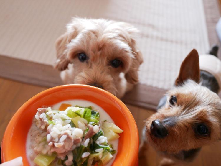 犬の「アレルギー」の治療と対処方法!