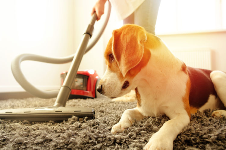 犬 掃除機 アレルギー