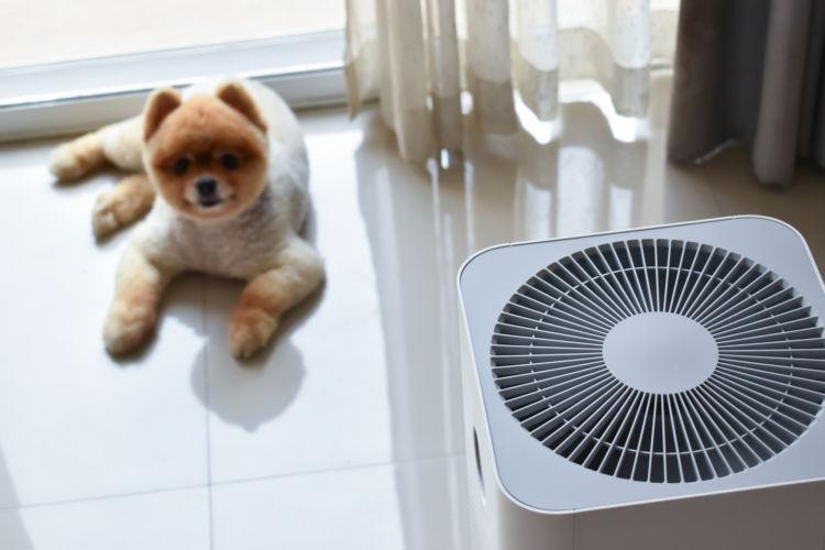 犬の「アレルギー」の予防はできる?(ハウスダスト・花粉)