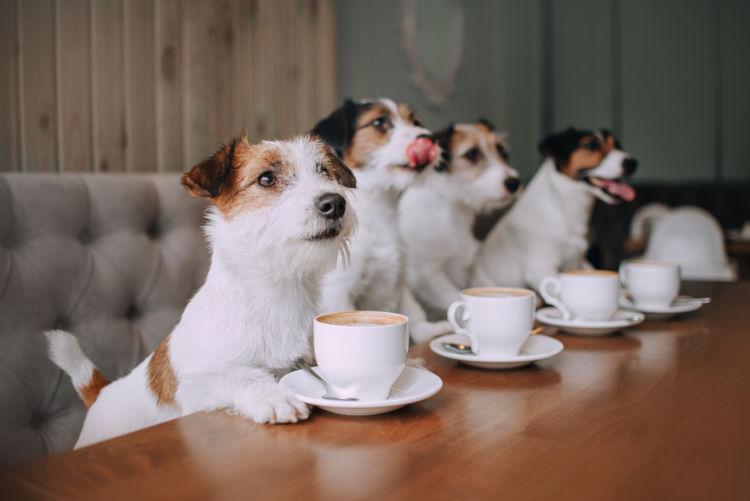 【獣医師監修】犬がお茶を飲んだり舐めたりしても大丈夫?与えてはダメなお茶と大丈夫なお茶!