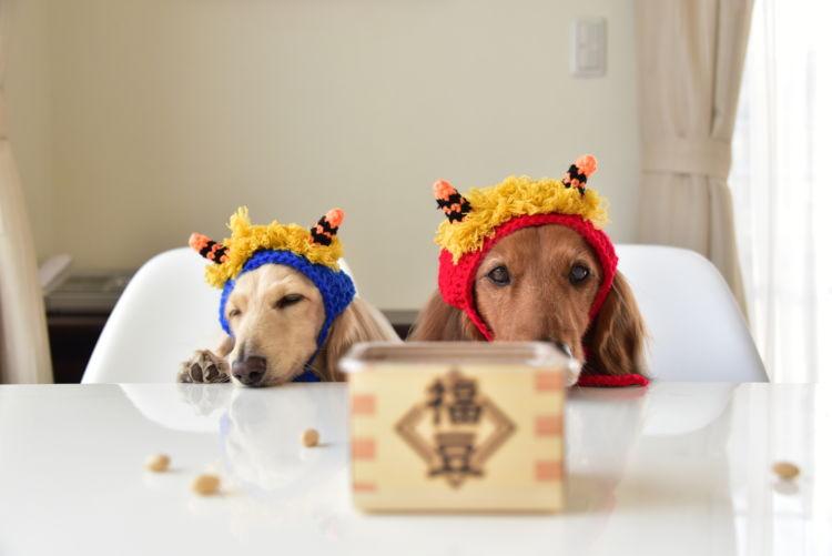 【獣医師監修】犬が大豆(生)を食べても大丈夫?節分の豆は?大豆アレルギーや注意点は!?