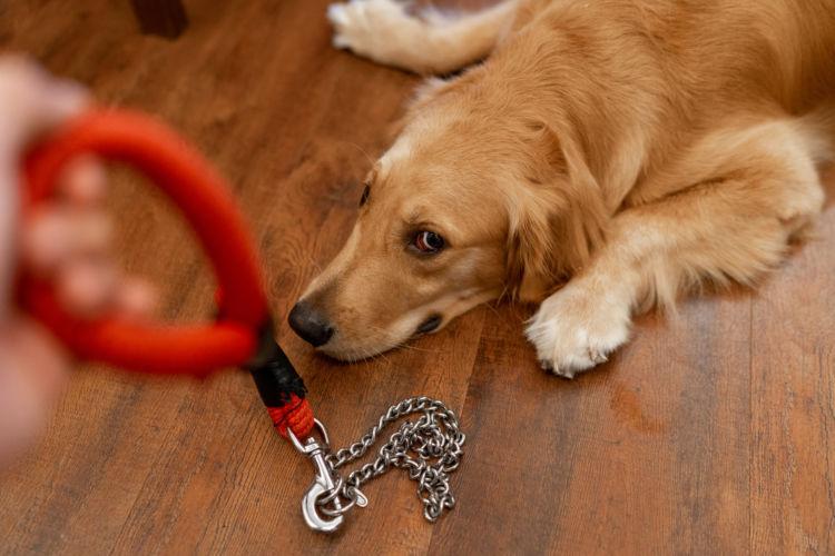 犬の生理(ヒート)時の対処法・注意点①【フェロモン】