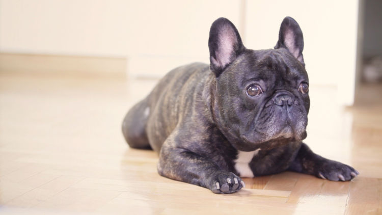 犬 てんかん症候群 再発 リスク