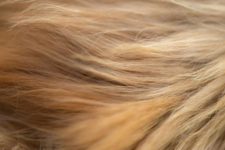 栄養素②【オメガ3脂肪酸】「認知症予防」「細胞膜や皮膚・被毛の健康」