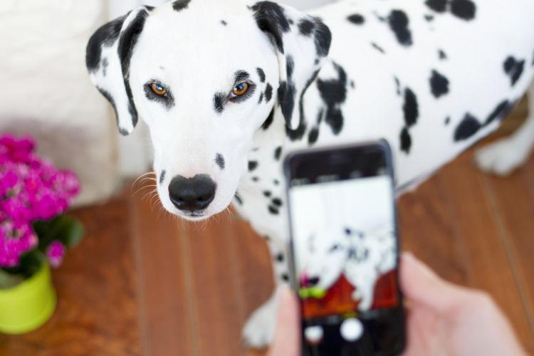 玉ねぎを誤飲した場合の応急処置と対処法④【動物病院に犬の今の状態を伝える】