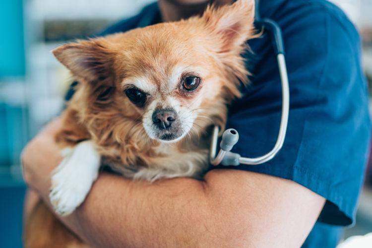 犬が「ネギ」を誤食した場合の応急処置と対処法は?