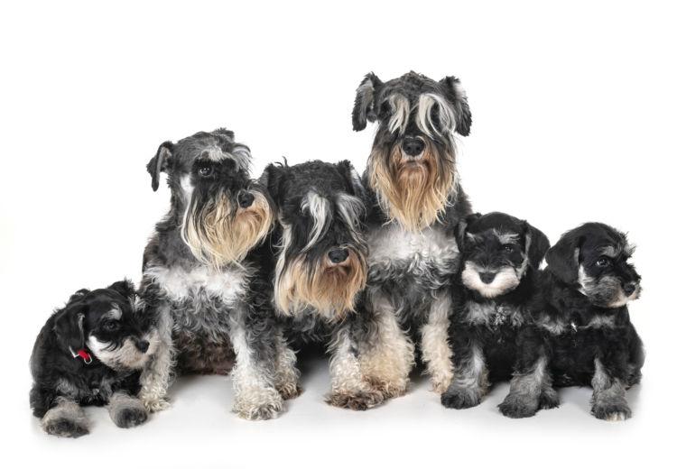 トイレトレーニングの注意点②【「子犬」と「成犬」、「オス」と「メス」の違い】