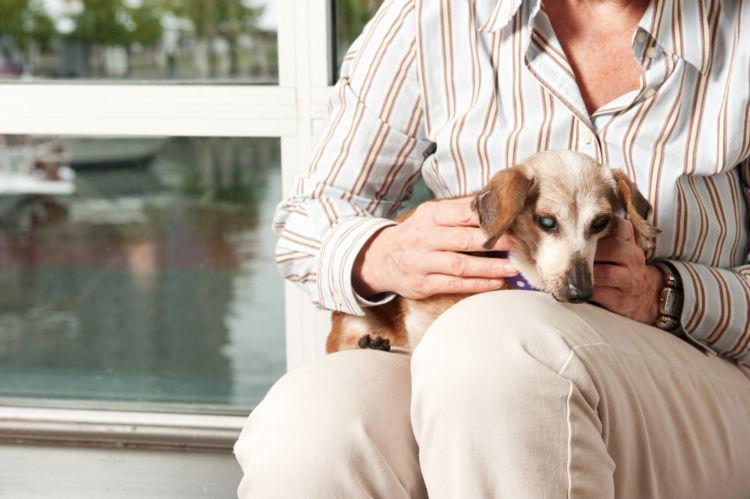犬と人の【年齢換算例】②犬種