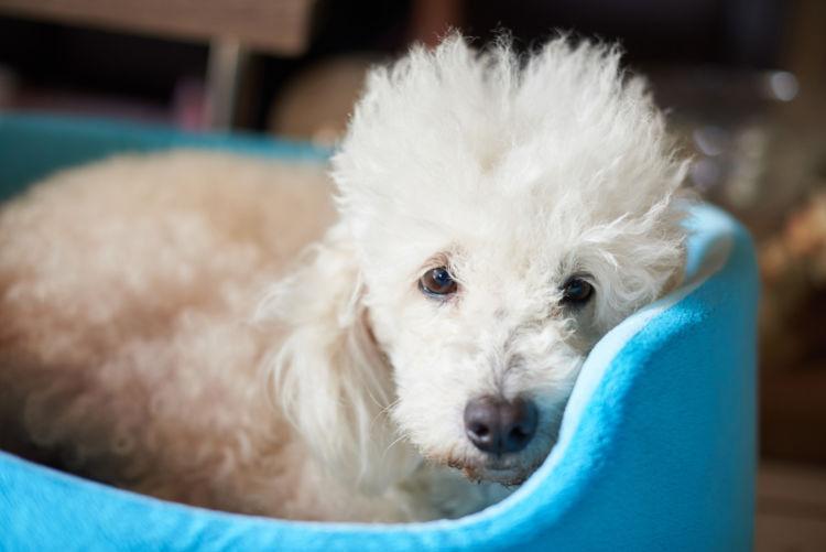 犬 老衰 症状 兆候