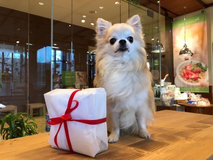 【Pally】愛犬に人気でおすすめ【バレンタインプレゼント!】