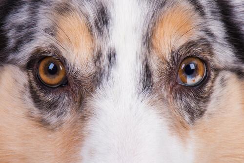 身近に潜む危険な病気!目の周りにできてしまったイボは悪性の腫瘍なの?