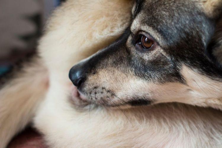 犬が自分の体を舐める・噛む「主な病気」⑤【肛門嚢炎】