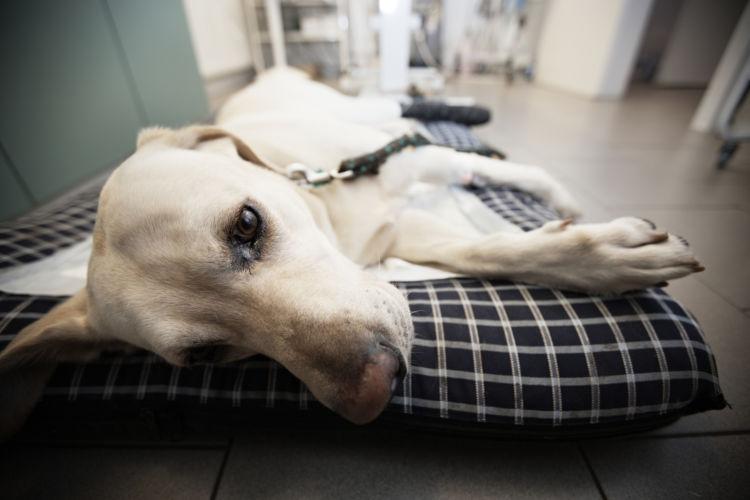 老犬のベッド注意点①【置き場所】