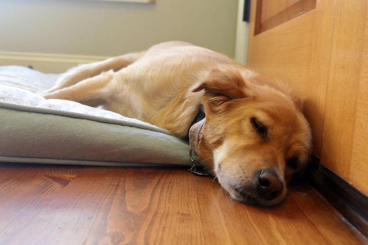 【老犬の床ずれ】予防