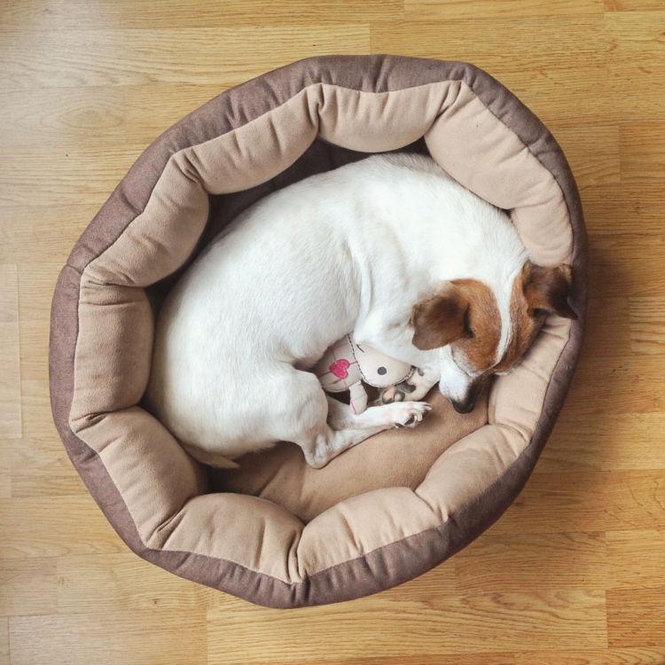 老犬 ベッド