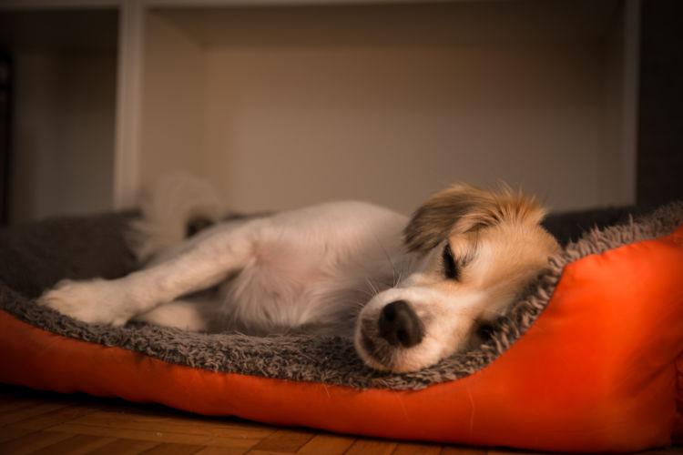 老犬 介護用ベッド 低反発 高反発