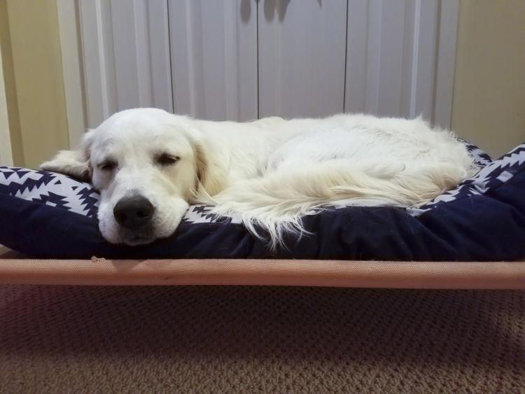 【老犬のベッド】手作り