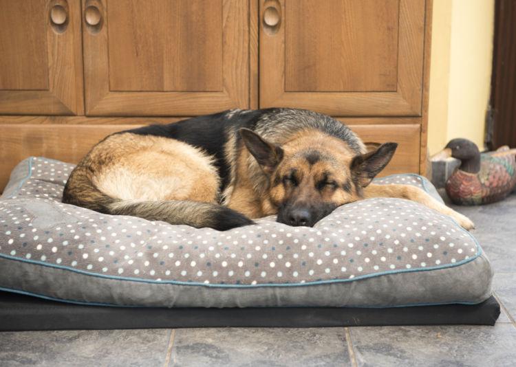 【老犬のベッド】犬だって楽に寝たい