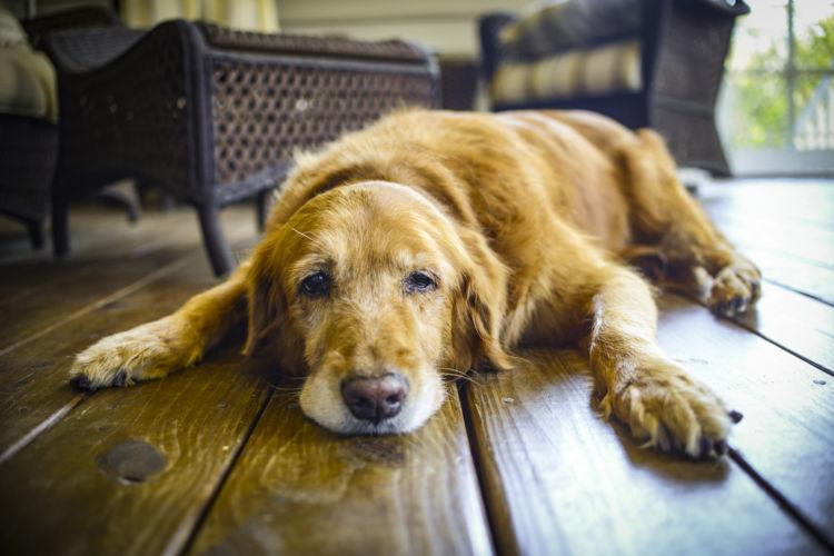 老犬の便秘の原因②【運動量の低下】