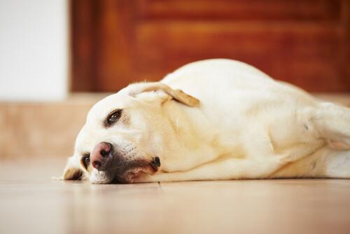 うつ病は犬にとって身近な病気!寂しさによるストレスが原因?