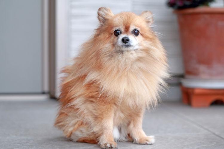 老犬の便秘の原因⑥【カルシウム・カリウム】