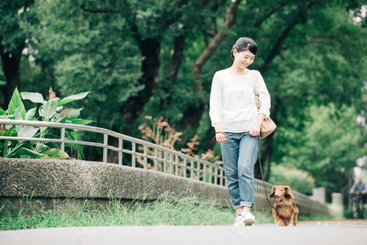 【獣医師監修】老犬の散歩はいつまで必要?歩かない場合は?時間や距離、頻度(回数)の目安は?