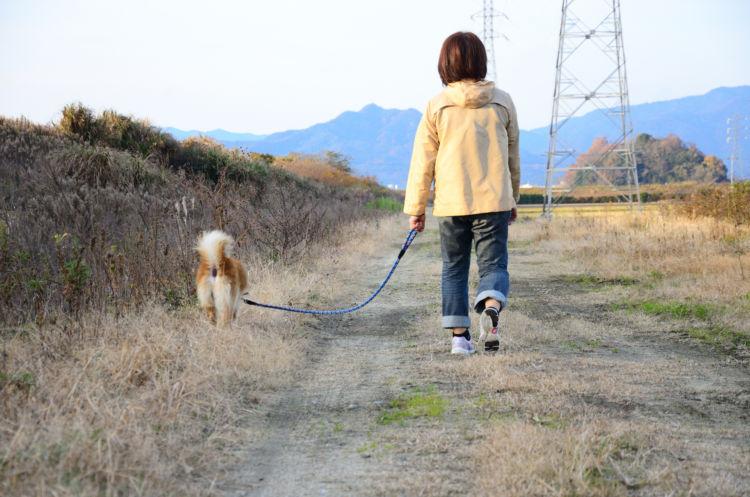 老犬 散歩 自力
