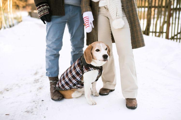 老犬の散歩の注意点②【冬】