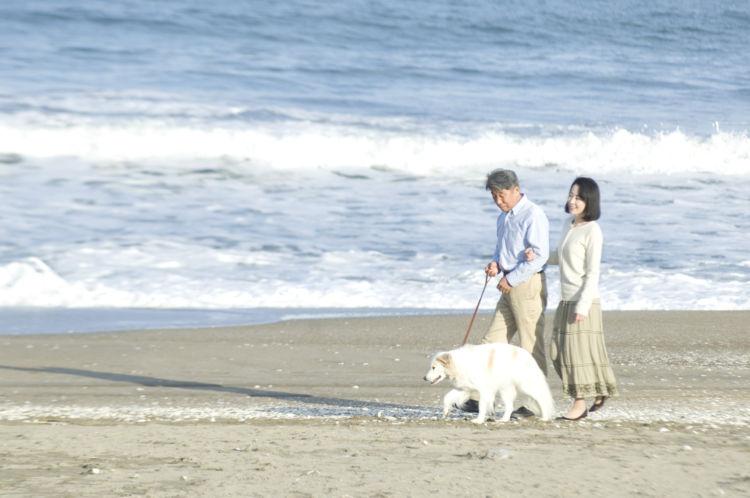 老犬 散歩 歩き方
