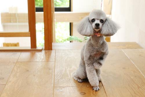 初めて犬を飼う人に参考にしてほしい、飼いやすいおすすめな犬種4選!