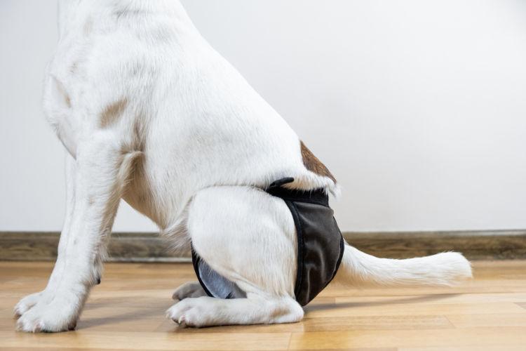 【老犬のオムツ】オムツを使用する時間をできるだけ短く