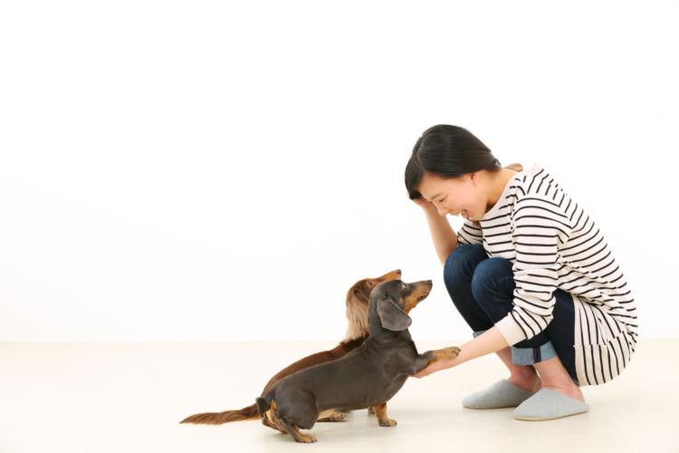 老犬 バランス感覚 トレーニング
