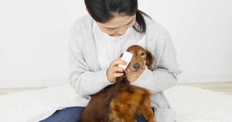 【老犬のシャンプー】立ち上がりが難しい犬や寝たきりの犬は?
