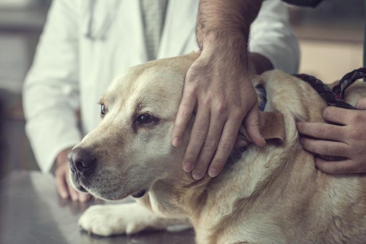 老犬のてんかん【予防対策】